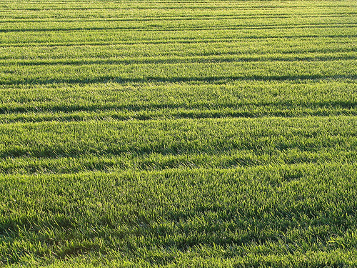 Restoring your lawn