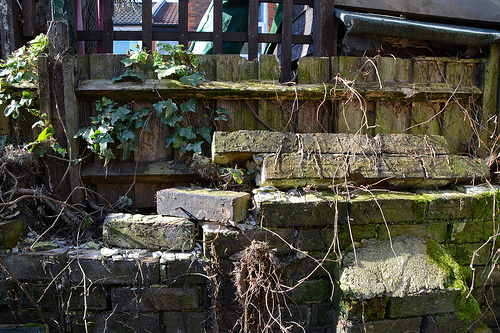 Wall-damaging weeds