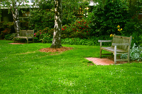 Creating your lawn